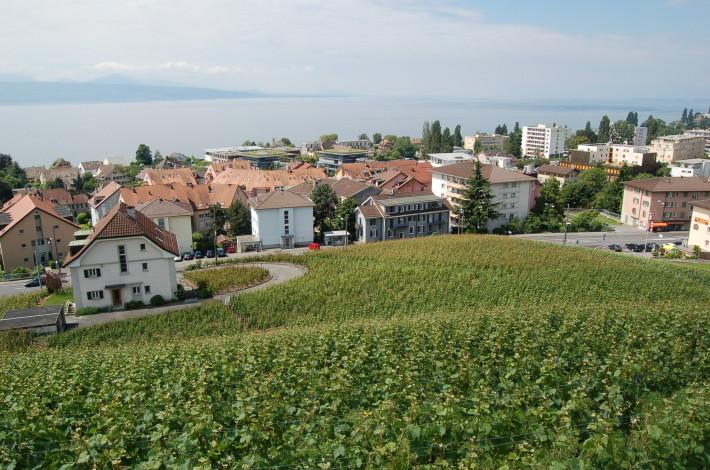Vignes de Paudex © Paudex